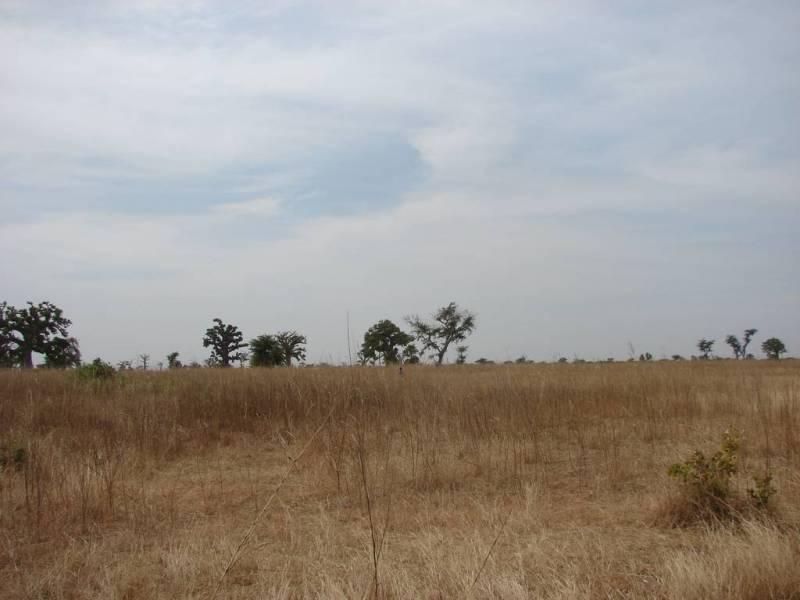Plantation nouvelle